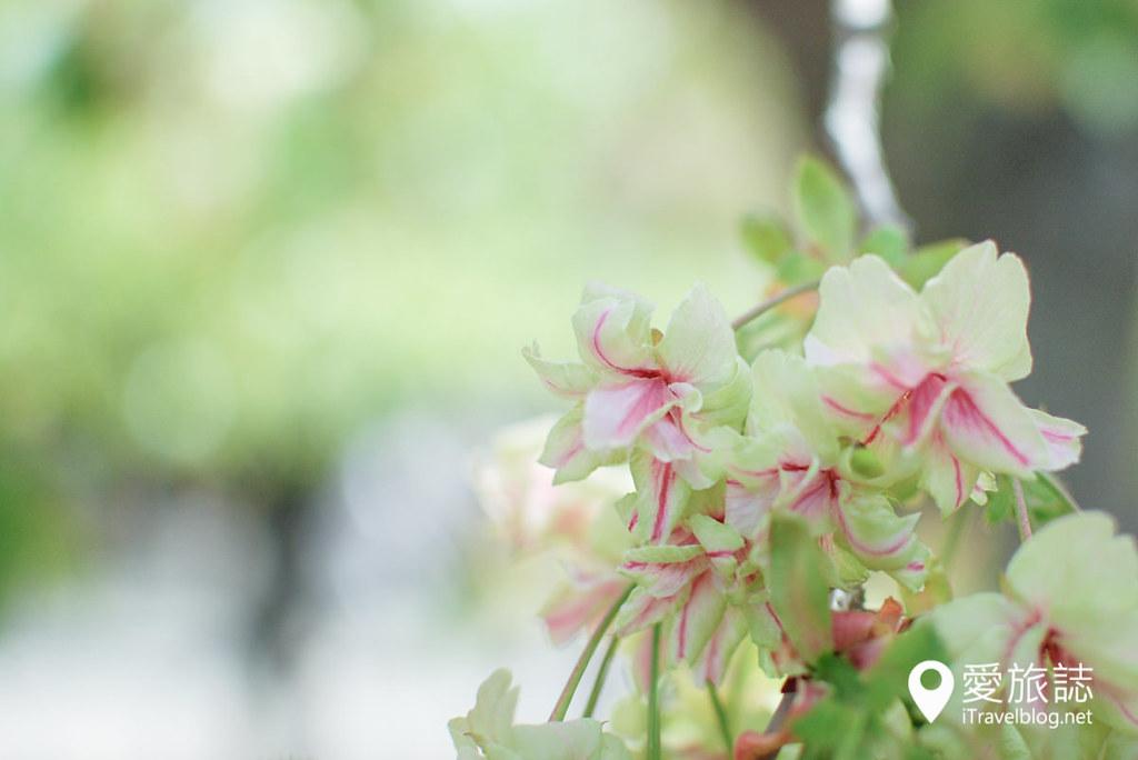 大阪造币局 樱花 33