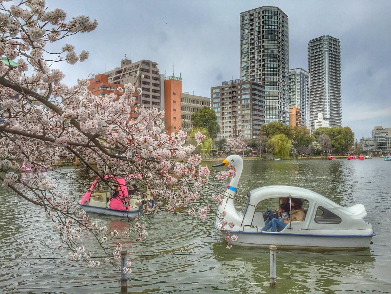 Ueno Park Cherry Blossoms (Sakura)