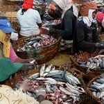 01 Viajefilos en Sri Lanka. Negombo 21