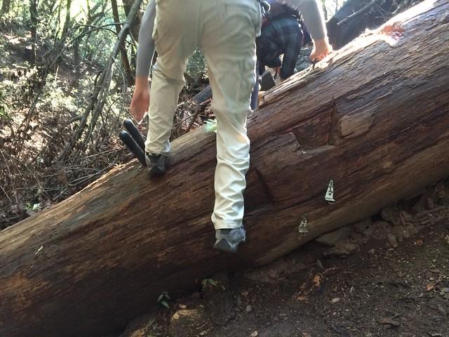 treeladder_sprucegrove