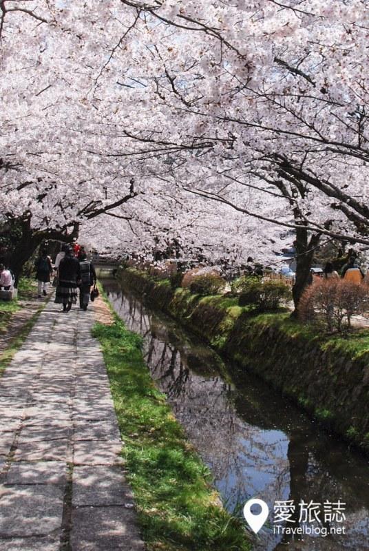 京都赏樱景点 哲学之道 22