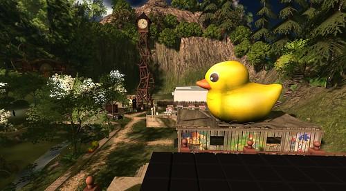 Escapdes Island Duck