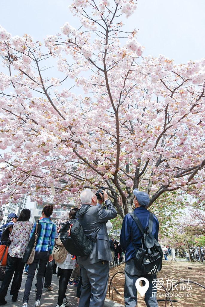 大阪造币局 樱花 25