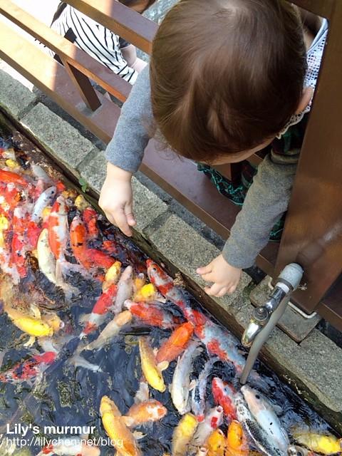 這是你第一次餵魚,你一定感覺很新奇吧
