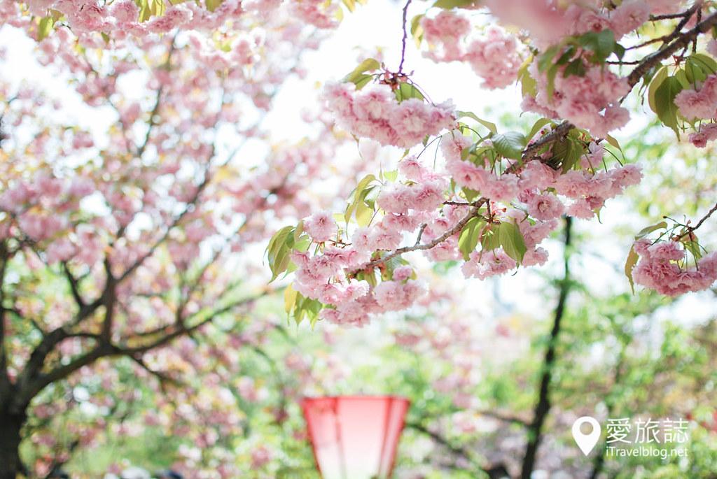 大阪造币局 樱花 35
