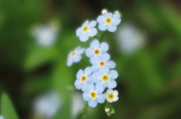 Bald Mountain Trail Flowers