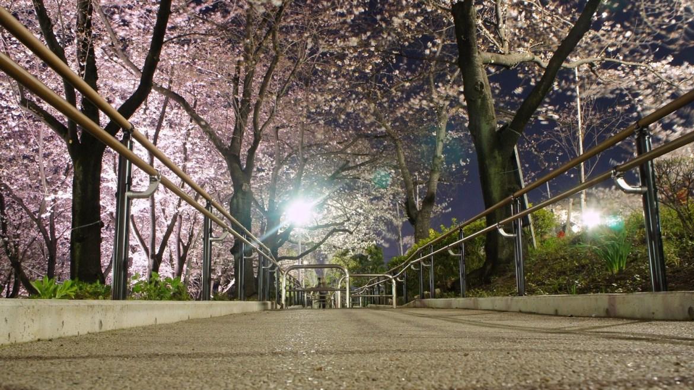 Sakura, Cherry Blossoms and Skytree