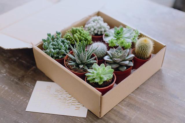 Gift Idea Succulent Gift Box A Pair Amp A Spare