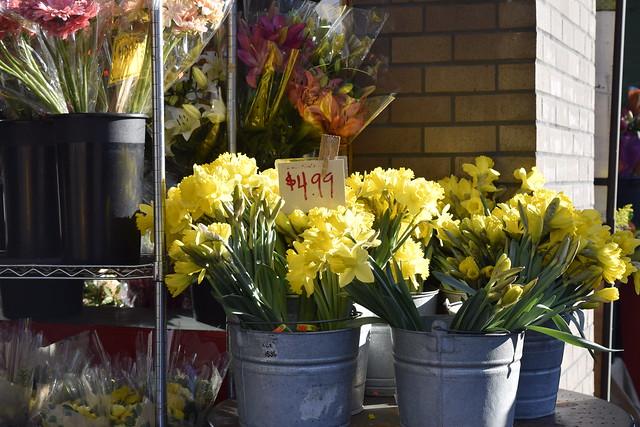 sf_daffodils