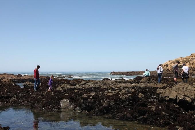 Family Exploring the Beach