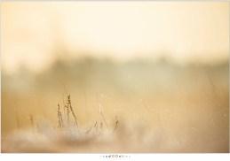 Met een telelens en kleine scherptediepte kan met het tegenlicht mooie zachte beelden gemaakt worden