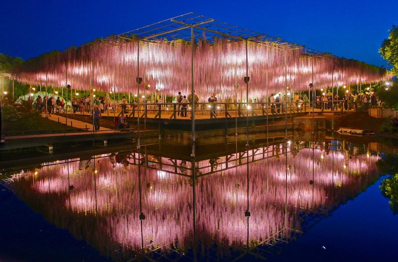 Ashikaga Flower Park パノラマ写真