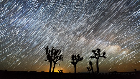 Milky Way Rising Behind Joshua Trees.