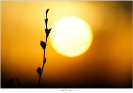 Spelen met de zon en details in het landschap