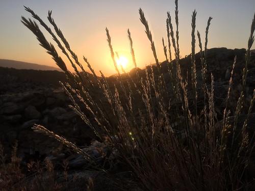 PCT Day 8 sunrise