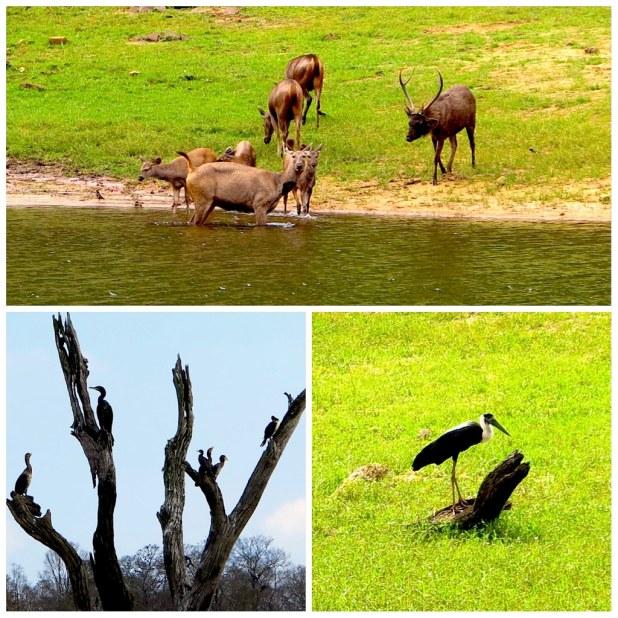 Fauna Lago Periyar