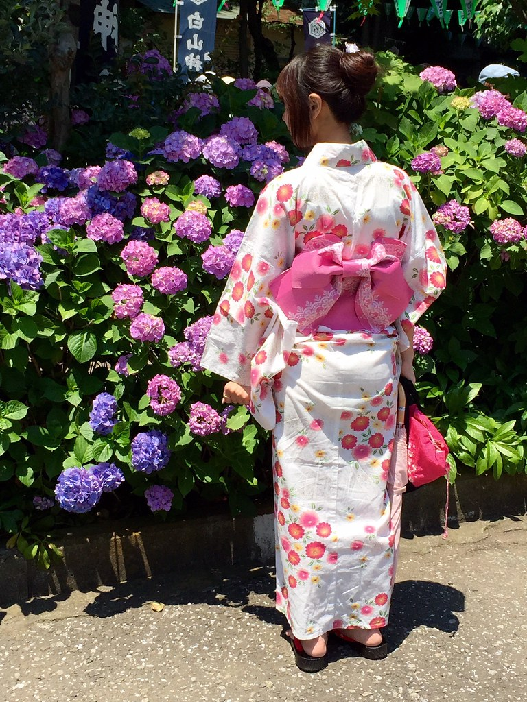 Japanese Kimono wearing lady watching the Ajisai Hydrangea flowers at Hakusan Shrine