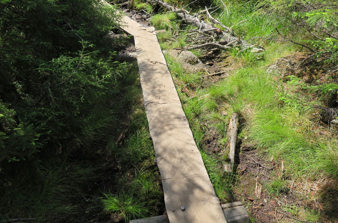 Bald Mountain Trail Planks