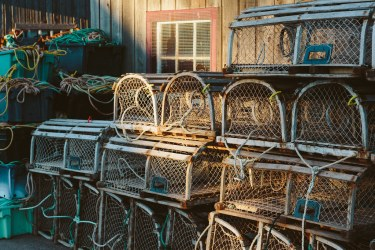 Lobster traps in the Morning