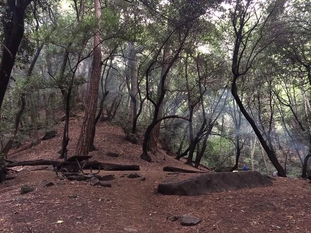 camp2_sprucegrove