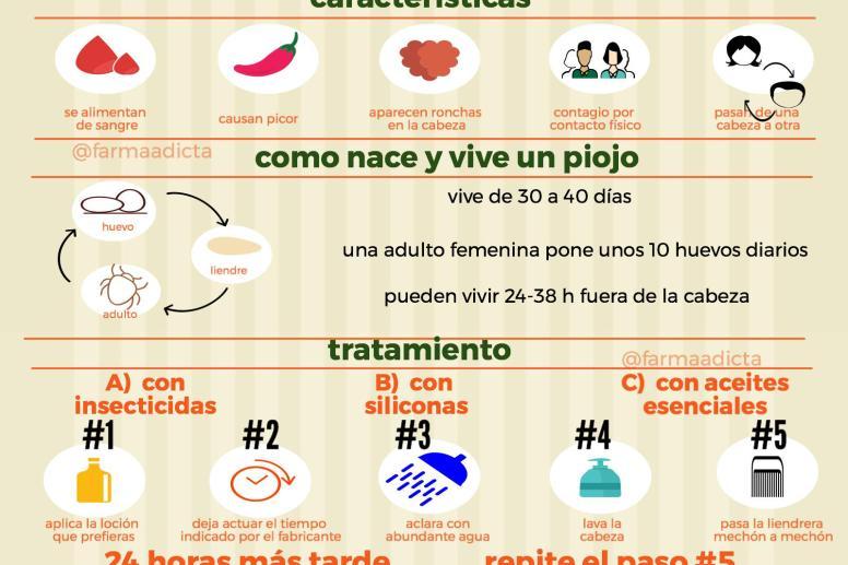información necesaria sobre piojos