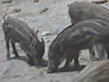 zoo3gif.jpg