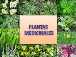 PLANTAS MEDICINALES EN EL DEPORTE