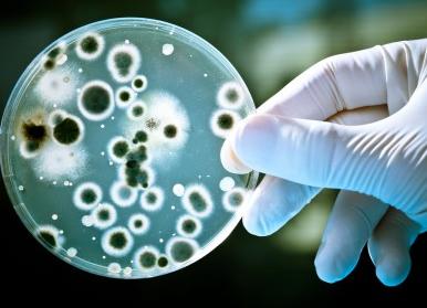 Halicin, Antibiotik Kuat Baru yang Ditemukan oleh Kecerdasan Buatan