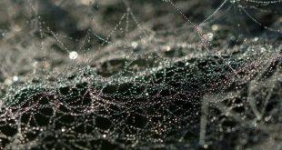 Peneliti Ciptakan Antibiotik Jaring Sutra Laba-laba yang Mampu Sembuhkan Luka
