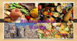 Menuju Industri Makanan Ramah Lingkungan