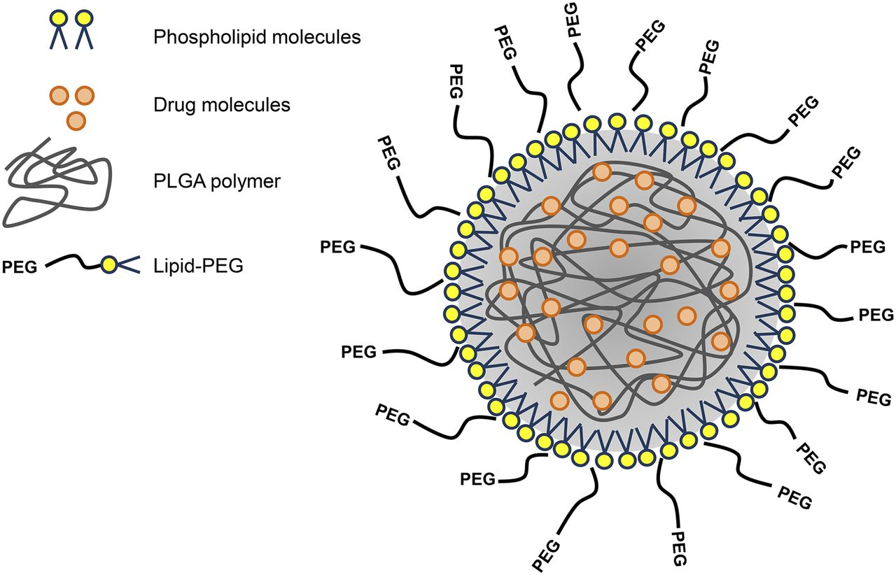 Sistem Penghantaran Obat Baru Nanopartikel Hibrid Lipid-Polimer