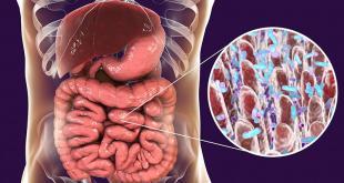 Bakteri Usus Dapat Mengubah Cara Kerja Obat di Dalam Tubuh