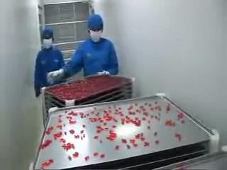 Pembuatan kapsul lunak farmasi