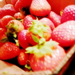 Strawberries, the best ones in THE WORLD