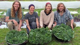 cropped-gathering-greens-for-meals-without-wheels-b.jpg