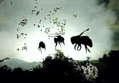 Bees flying away from a bee hive