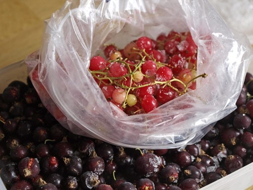 blackcurrants and redcurrants
