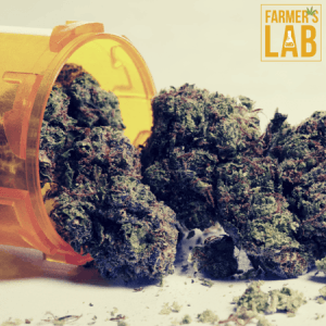 Cannabis Seeds Shipped Directly to Your Door in Biddeford, ME. Farmers Lab Seeds is your #1 supplier to growing Cannabis in Biddeford, Maine.