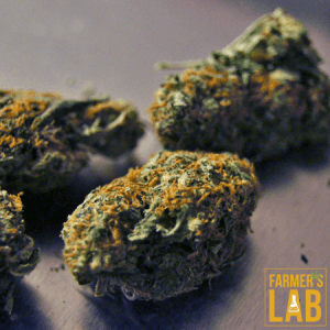 Cannabis Seeds Shipped Directly to Your Door in Bridge City, LA. Farmers Lab Seeds is your #1 supplier to growing Cannabis in Bridge City, Louisiana.