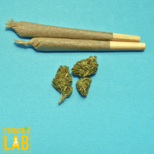 Cannabis Seeds Shipped Directly to Your Door in Bridge City, TX. Farmers Lab Seeds is your #1 supplier to growing Cannabis in Bridge City, Texas.