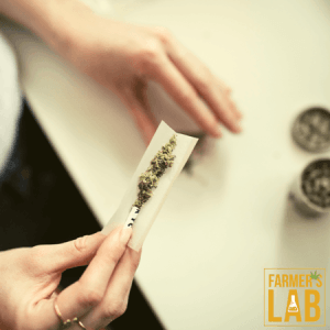 Cannabis Seeds Shipped Directly to Your Door in Dalby, QLD. Farmers Lab Seeds is your #1 supplier to growing Cannabis in Dalby, Queensland.
