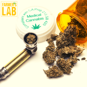 Cannabis Seeds Shipped Directly to Your Door in Elyria, OH. Farmers Lab Seeds is your #1 supplier to growing Cannabis in Elyria, Ohio.