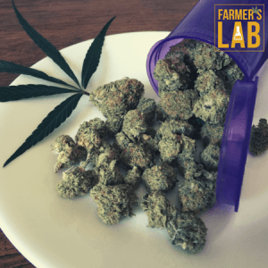 Cannabis Seeds Shipped Directly to Your Door in Eugene, OR. Farmers Lab Seeds is your #1 supplier to growing Cannabis in Eugene, Oregon.