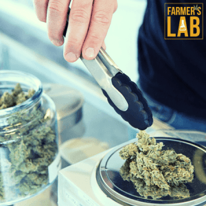 Cannabis Seeds Shipped Directly to Your Door in Gaspe, QC. Farmers Lab Seeds is your #1 supplier to growing Cannabis in Gaspe, Quebec.