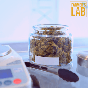 Cannabis Seeds Shipped Directly to Your Door in Lethbridge, AB. Farmers Lab Seeds is your #1 supplier to growing Cannabis in Lethbridge, Alberta.