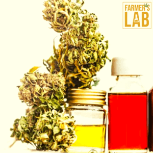 Cannabis Seeds Shipped Directly to Your Door in Ormond-By-The-Sea, FL. Farmers Lab Seeds is your #1 supplier to growing Cannabis in Ormond-By-The-Sea, Florida.
