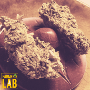 Cannabis Seeds Shipped Directly to Your Door in Pismo Beach, CA. Farmers Lab Seeds is your #1 supplier to growing Cannabis in Pismo Beach, California.