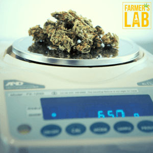 Cannabis Seeds Shipped Directly to Your Door in Ringwood, NJ. Farmers Lab Seeds is your #1 supplier to growing Cannabis in Ringwood, New Jersey.