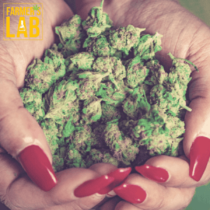 Cannabis Seeds Shipped Directly to Your Door in Sahuarita, AZ. Farmers Lab Seeds is your #1 supplier to growing Cannabis in Sahuarita, Arizona.