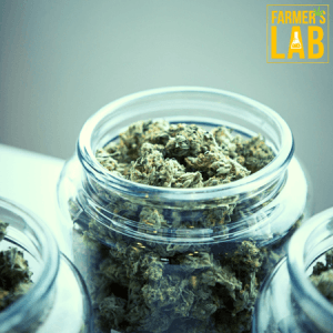 Cannabis Seeds Shipped Directly to Your Door in San Bernardino, CA. Farmers Lab Seeds is your #1 supplier to growing Cannabis in San Bernardino, California.